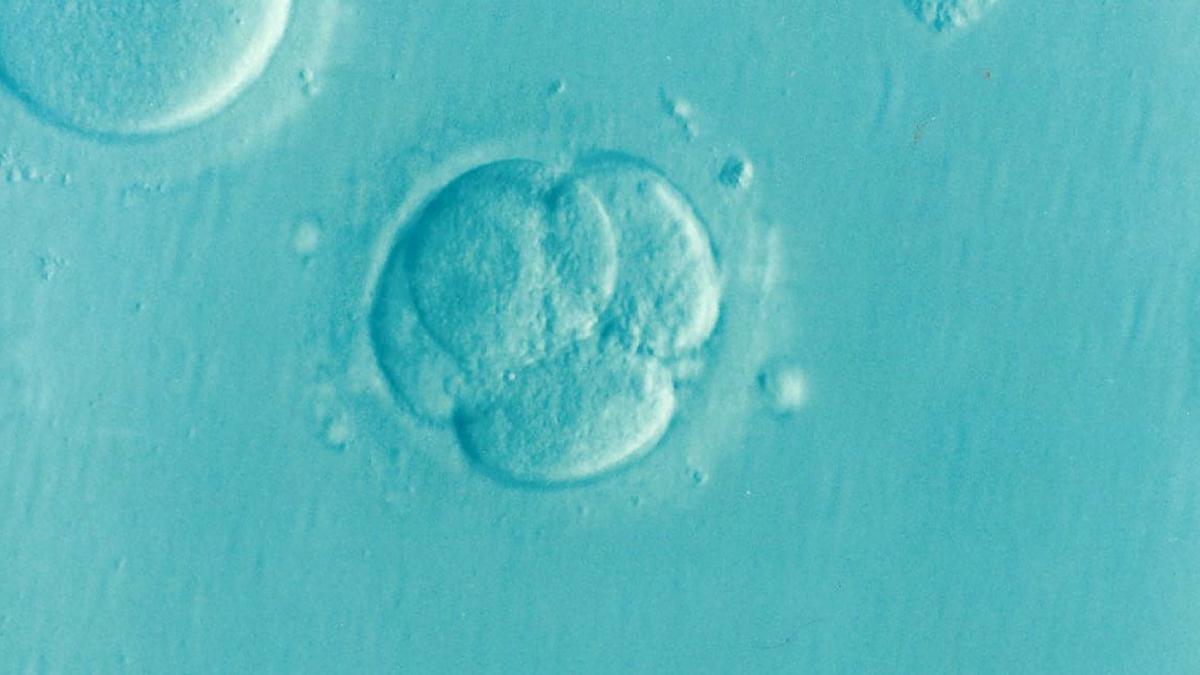 embryo-1514192_1920-1200x675.png
